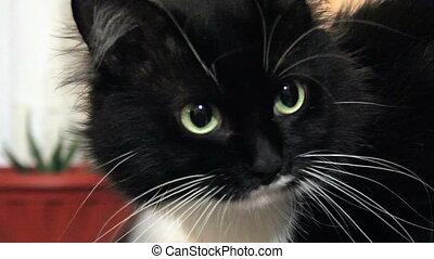 chat, regarder, appareil photo