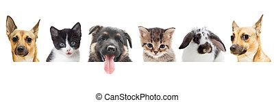 chaton, chiot, lapin, regarder