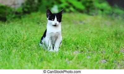 chaton, herbe, vert, séance