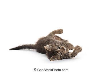 chaton, mignon, pose, blanc, bas, fond