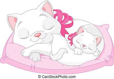 chats, blanc