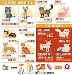 chats, ensemble, infographics
