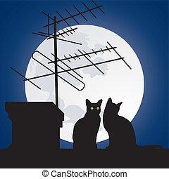chats, toits