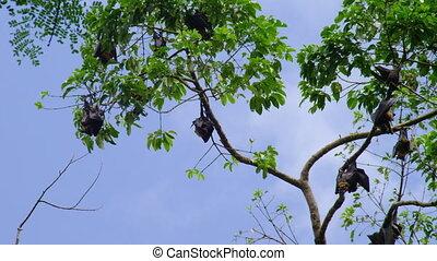 chauves-souris, prise vue large, arbres