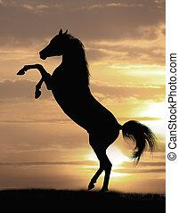 cheval, arabe, étalon