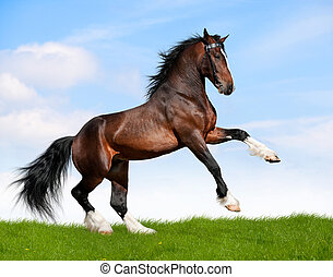 cheval, baie, field., gallops
