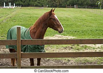 cheval bois, grillage