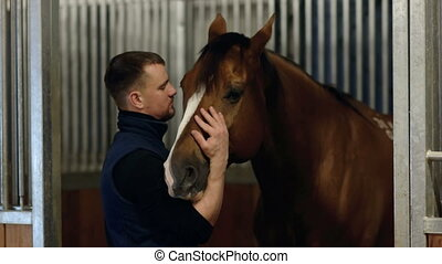 cheval brun, alimentation, amour, haut, caresser, jeune, animals., stabled., portrait, fin, type, soin, jouer, horse., homme