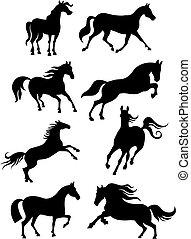 cheval, ensemble