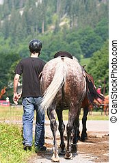 cheval, homme