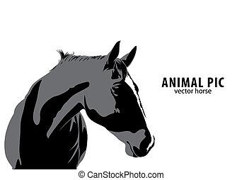cheval, vecteur