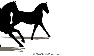 chevaux, beaucoup, silhouette