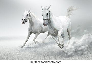 chevaux blancs