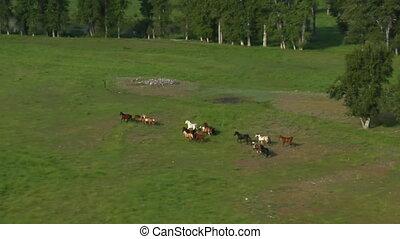 chevaux, coup, courant, vert, aérien, vallée