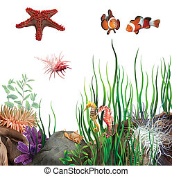 chevaux, fish, ocean., fond, étoile, shells., clown, mer, seabed.