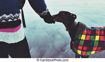 chien, alimentation, image., elle, colorised, lévrier, effet, filtre, plage., hipster, unrecognisable, girl