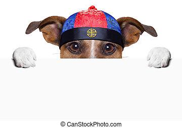 chien, asiatique