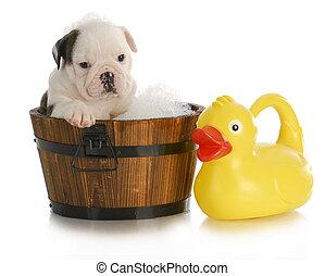 chien, bain