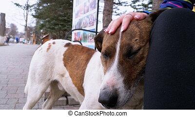 chien, banc, girl, caresser, park., errant, museau, triste, ville