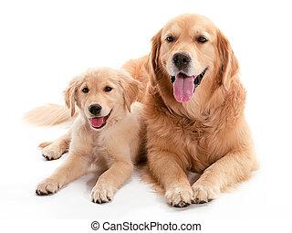 chien, buddys