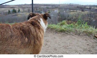 chien, forteresse