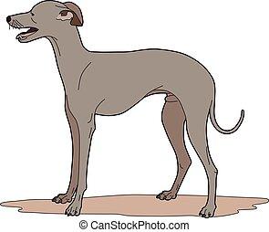chien, plein de verve