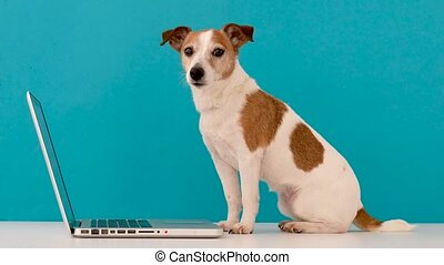 chien, regarder, studio, ordinateur portable