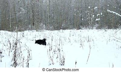 chien, running., noir