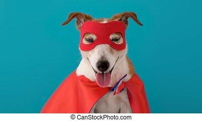 chien, super, déguisement, héros