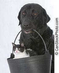 chien, tenue, chaton