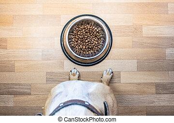 chiot, devant, prêt, séance, nourriture, sommet, bowl., manger, chien, point, indoors., vue, bol