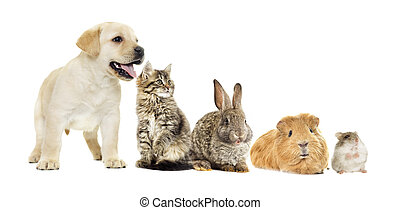 chiot, lapin, chaton