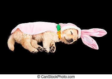 chiot, lapin pâques, dormir