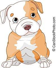 chiot, pitbull