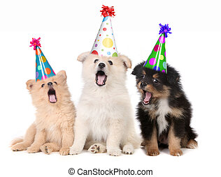 chiots, anniversaire, chant, heureux, chanson