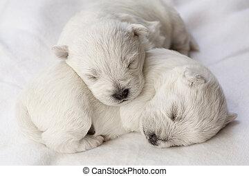 chiots, dormir