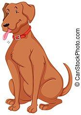 chouchou, brun, fourrure, chien
