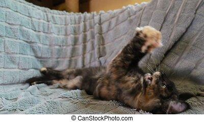 chouchou, chat noir, jouet, rigolote, nègre, home., rouges, jouer, sofa., chat, chaton, animaux familiers, plume, maison, curieux, jeune, surprenant, shag, maine