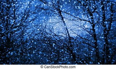 chute neige, nuit
