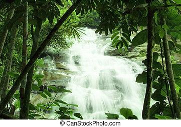 chutes d'eau, forêt, vert
