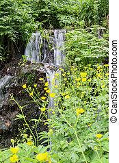 chutes d'eau, forêt verte, été