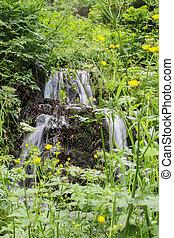 chutes d'eau, forêt verte
