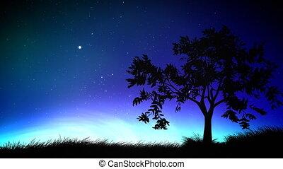 ciel, arbre, boucle, nuit