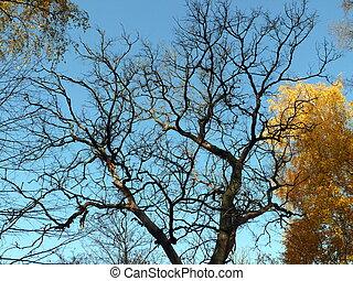 ciel bleu, arbre, séché, fond