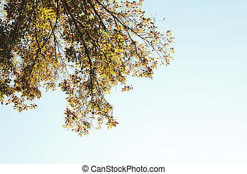 ciel, bleu, espace, arbre, yellowed, texte, contre, feuilles