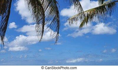 ciel bleu, feuilles, arbre, paume, fond