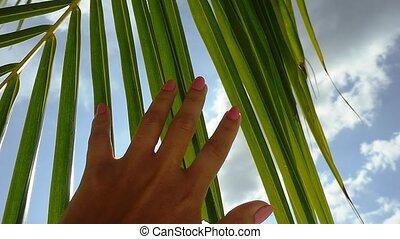 ciel clair, voyage, lent, arrière-plan., feuille, concept., main, sun., clair, exotique, soleil, mouvement, femme, paume, toucher, lentille, bleu, effets, femme, hd, flamme, apprécier
