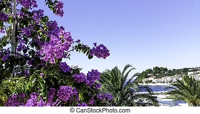 ciel, croatie, fleurs, bleu, vilage, fond, mer, -, podgora, bougainvillea, adriatique