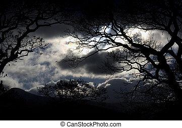 ciel, district lac, nuit