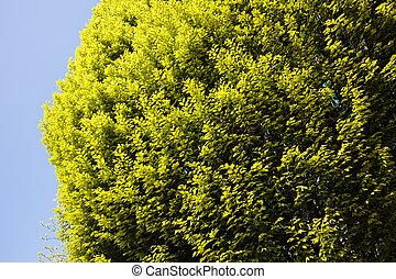 ciel, fond, cime arbre